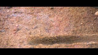 Naaigal Jaakirathai - Trailer