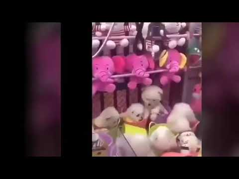 Brady - Real Puppies Grabbed In Chinese Claw Game