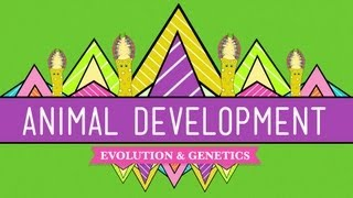Crash Course: Biology: Animal Development thumbnail
