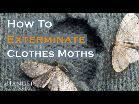 How To Exterminate Clothes Moths? 🦋 | Kirby Allison