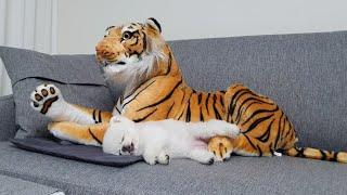 용맹한 강아지의 침대를 뺏은 호랑이의 최후
