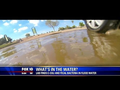 E. coli, fecal bacteria found in flood waters around valley