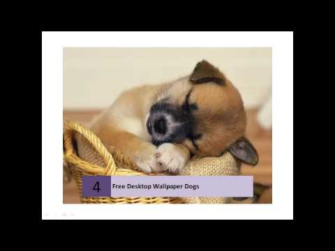 Free Dog Lovers Desktop Wallpapers