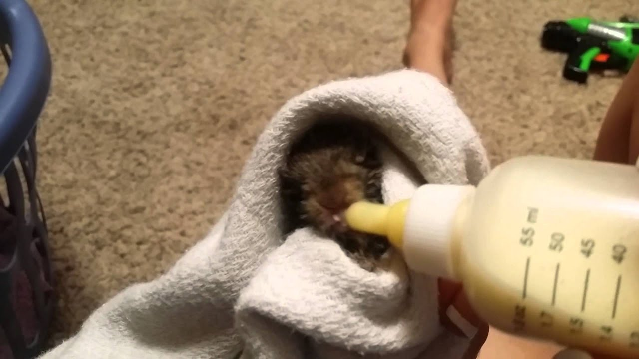 Baby Rabbit Drinking Bottled Milk Youtube