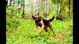 Вера - собака, умеющая подмигивать!