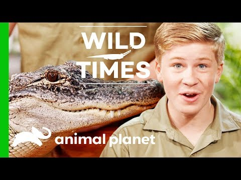 Kangaroos and Alligators, Oh My! | Wild Times