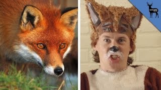What The Fox ACTUALLY Says! thumbnail