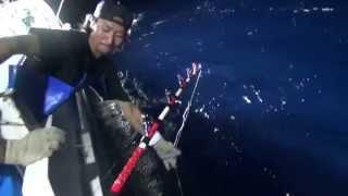 石垣島沖の巨大マグロ