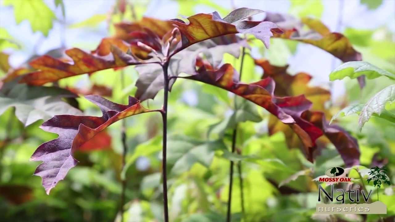 When To Plant A Tree Nativ Nurseries