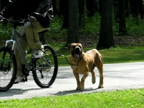 Schutzhund U.S.A  ad Trial North East ohio Working dog association