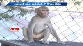 Monkeys Hulchal: People Fear About Monkeys In Nagarkurnool District | HMTV