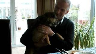 Alfie Border Terrier