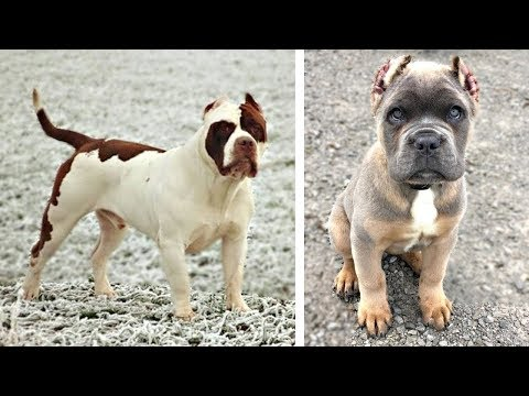 10 Most Expensive Dog Breeds Today