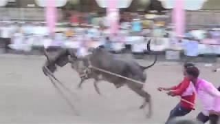 जेऊर गावाचा आगळावेगळा बेंदूर (बैलपोळा) Jeur Gav Bendur Bailpola 2017