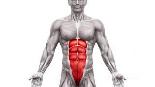 Quanto tempo curar puxado músculo oblíquo para