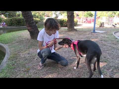 Babás para animais de estimação