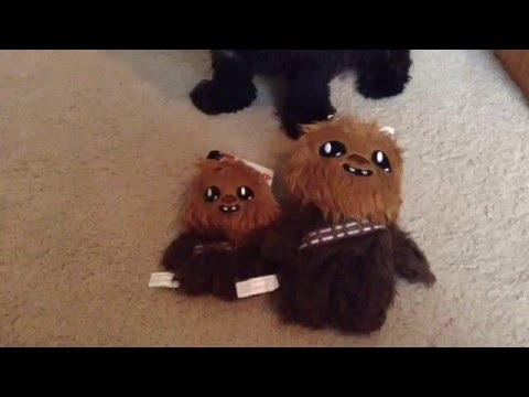 Marley does a toy unboxing: Chewbacca Toys!