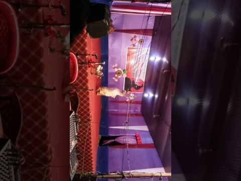 Dance performance in rabha sangeet by boranya saikia from golaghat