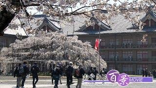 第57回「天理の桜2019」