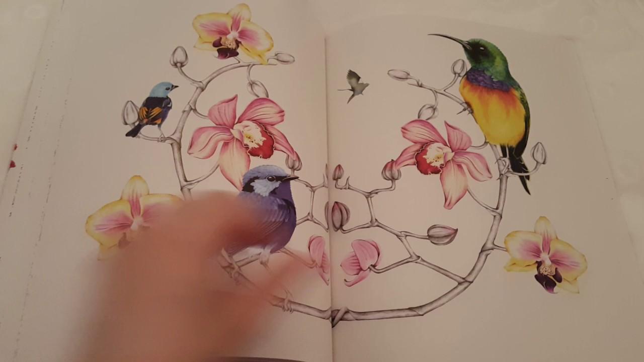 Coloriage Adulte Marabout.Le Paradis Des Oiseaux Grand Livre De Coloriage De Marabout Youtube