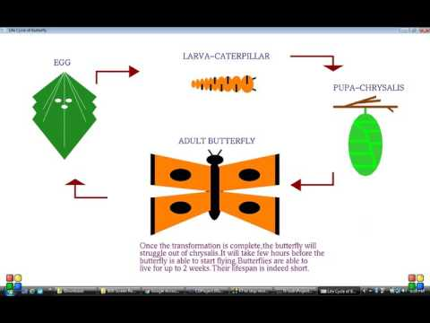 CGProject on life cycle of butterfly