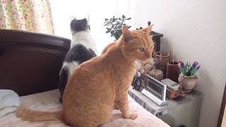 外からわずかに猫の喧嘩の声が聞こえてきます。どうにもこうにも外の猫...