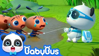 Baby Ant Gets Lost and Exhausted | Super Panda Rescue Team 2 | BabyBus Cartoon for Kids