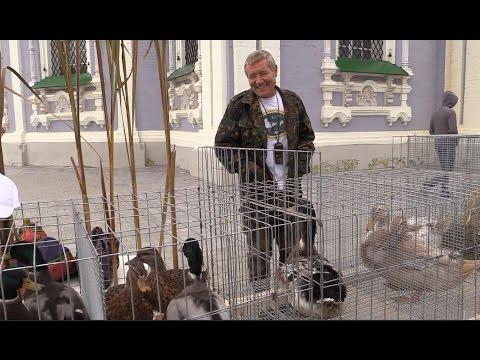 Куры, фазаны, утки на выставке селскохозяйственных животных и птицы в Туле