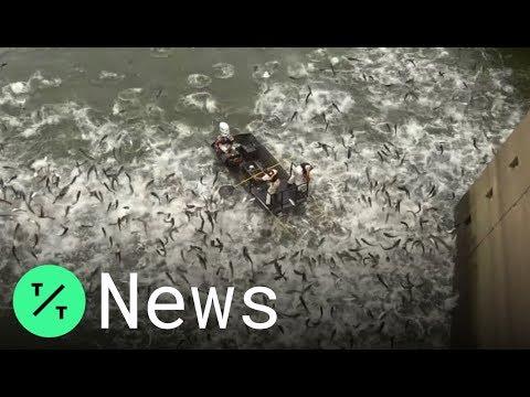 Kentucky Officials 'Electrofish' To Stop Invasive Asian Carp