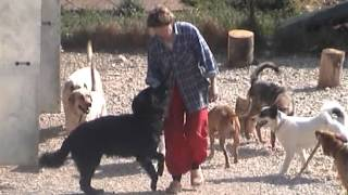 Зоогостиница «Лесси» 2009-2010г. гостиница для собак, кошек и других домашних животных