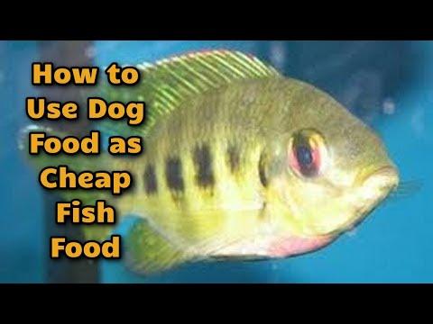 Aquaponics Update and Fish Food Tip