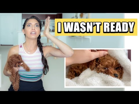 FIRST DAYS with a NEW PUPPY!  Potty Training, Vet Emergency and more...