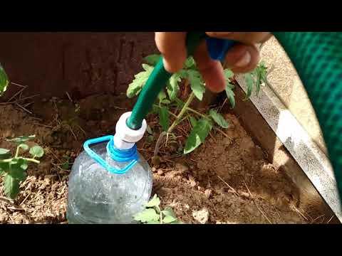 Сделал капельный полив из бутылок! Что взошло в огороде?