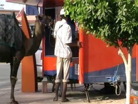 Chameau a la cabine telephonique [Saidia, Maroc]