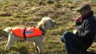 Search And Rescue Dog Becomes Southport Lifeboat's New R...