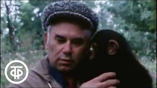 В мире животных. Обезьяний остров в Псковской области | В мире животных (1980)