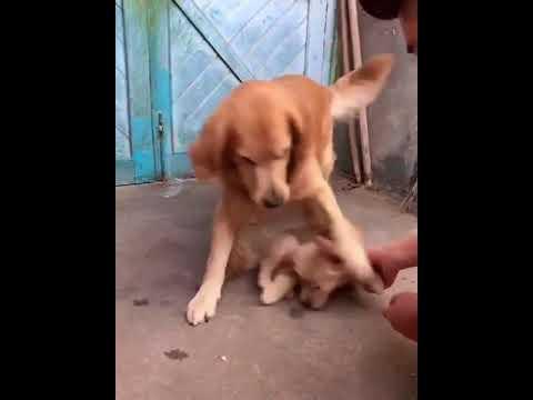 overprotective dog parent 2