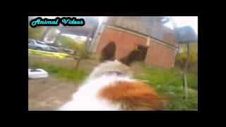 День собаки  Смешая собака  Прикол Смешно Собака и веб камера