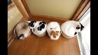 桶の中が落ち着くニャン!目をつぶりながら桶の中で過ごす猫に癒される