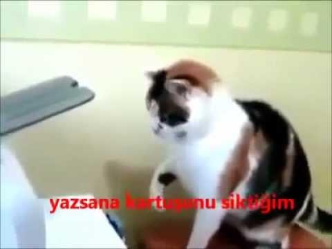 Kedinin Yazıcıyla İmtihanı 69