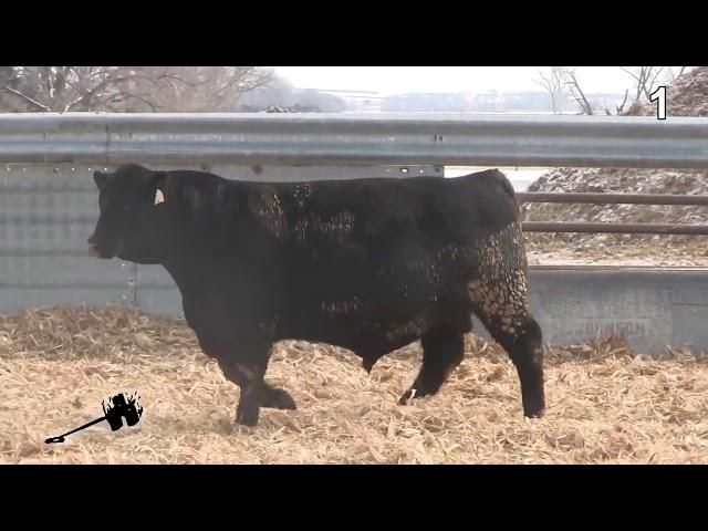 Wagonhammer Ranches Lot 1