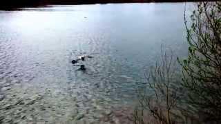 """Leila das erste Mal beim Schwimmen! Musik von Revolverheld: """"Mein Leben ist super!"""""""
