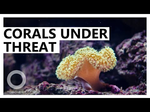 Coral Bleaching: Great Barrier Reef Enters