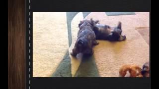 Самые смешные видео приколы про собак кошек 13 Супер классные щенки 2013