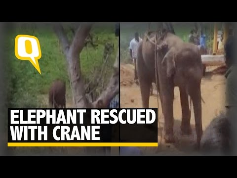 The Quint: This 10-Year Old Elephant was Rescued From a 45-Feet Deep Well