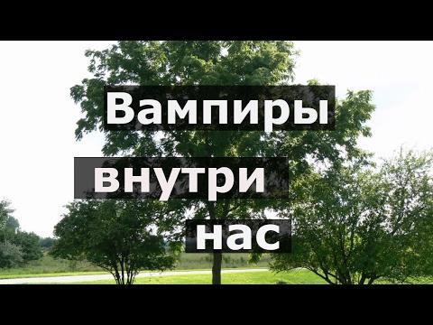 Тодикамп (Тодикларк) в Ростове-на-Дону, купить лекарство в