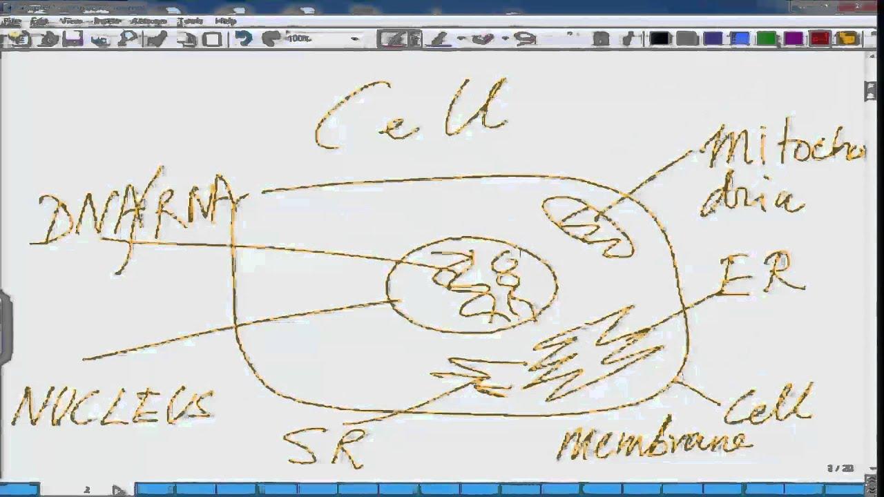 Mod-01 Lec-01 Animal Physiology