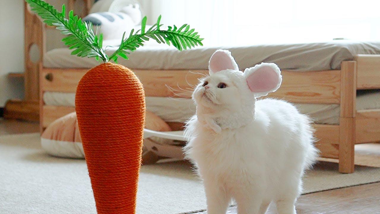 거대 토끼가 대왕 당근을 먹고 있어요!!!