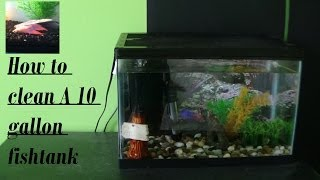 How To Clean A 10 Gallon Fish Tank
