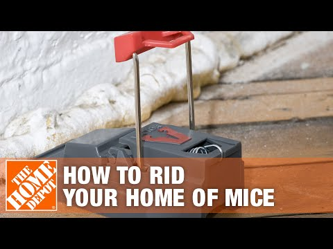How To Rid Your Home Of Mice